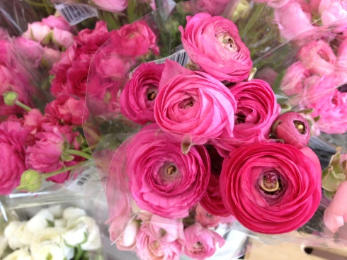 Ranunculus blossoms from Trader Joe's